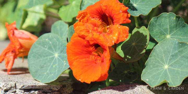 BloomDay-Sept2015_2