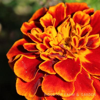 Bloom Day – September 2015