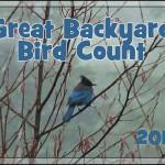 2012 Great Backyard Bird Count