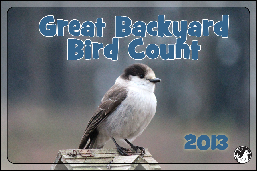 Ridgetop Farm and Garden | Great Backyard Bird Count | 2013