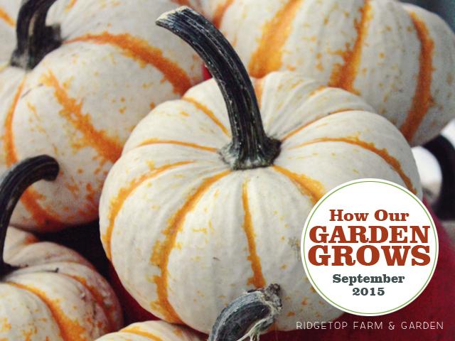 Garden - Sept2015 - title