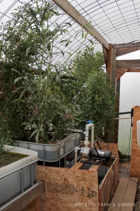 Ridgetop Farm and Garden | Aquaponics Update | October 2015