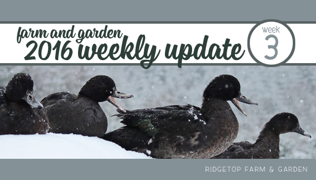 Ridgetop Farm and Garden | Weekly Update | Week 3