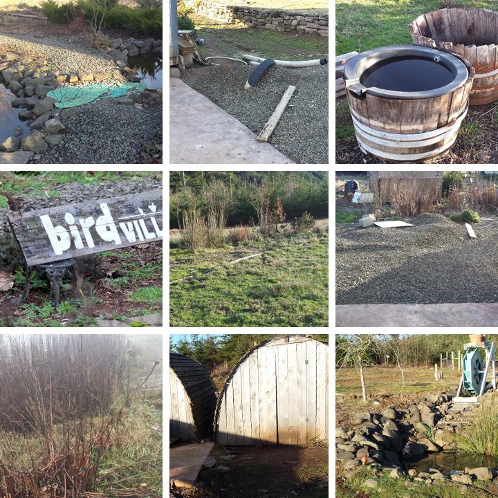 Ridgetop Farm and Garden | 2016 Update | Week 8