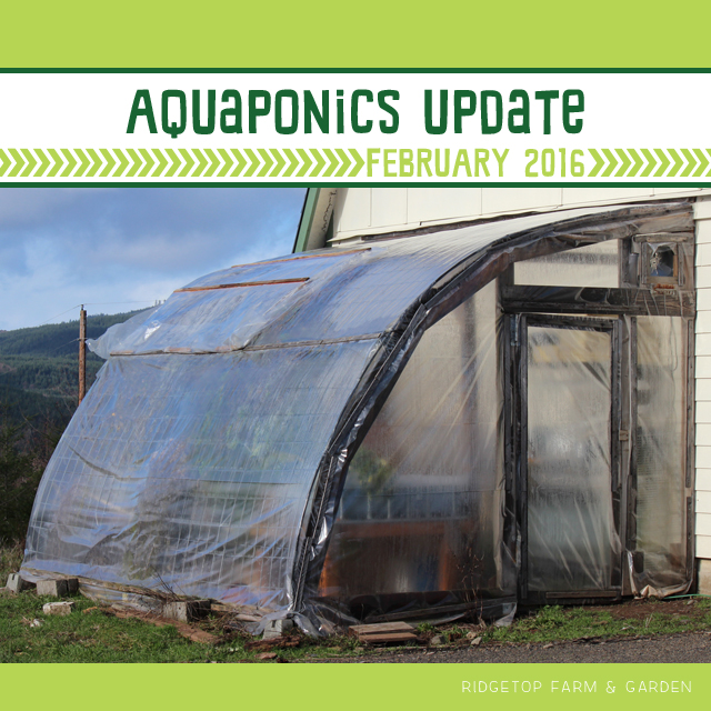 Ridgetop Farm and Garden | Aquaponics Update | February 2016