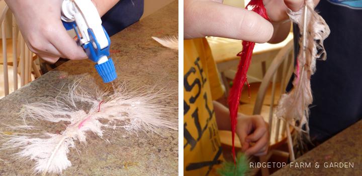 Ridgetop Farm and Garden | Home School | Animal Studies | Bird Feathers