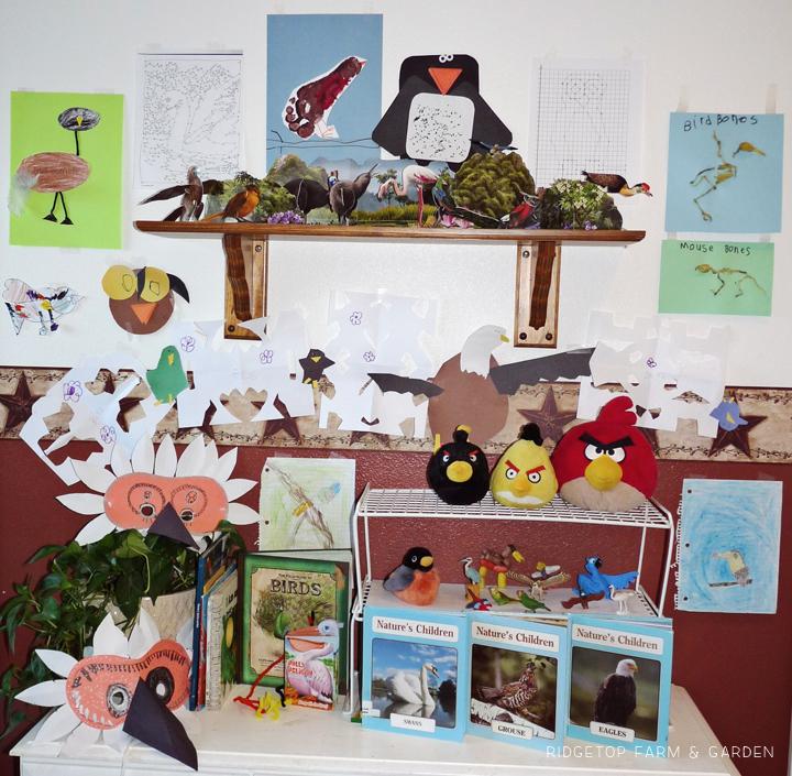 Ridgetop Farm and Garden | Home School | Animal Studies | Bird Display