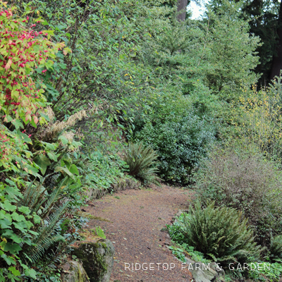 31 Days in Oregon: Hoyt Arboretum