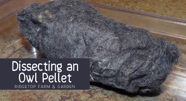 Ridgetop Farm and Garden | Home School | Dissecting Owl Pellet