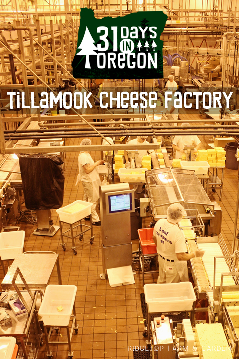 Ridgetop Farm and Garden | 31 Days in Oregon | Tillamook Cheese Factory