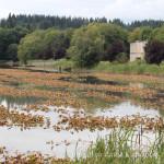 31 Days in Oregon: Vernonia Lake