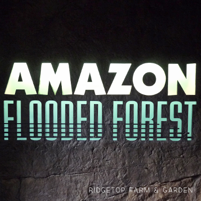 Amazon Flooded Forest at the Oregon Zoo