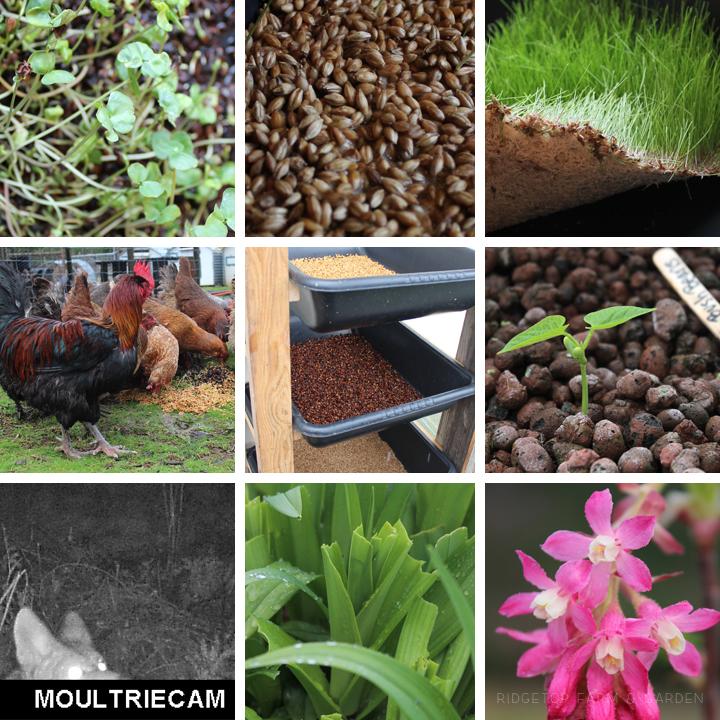 Ridgetop Farm and Garden | 2016 Update | Week 11