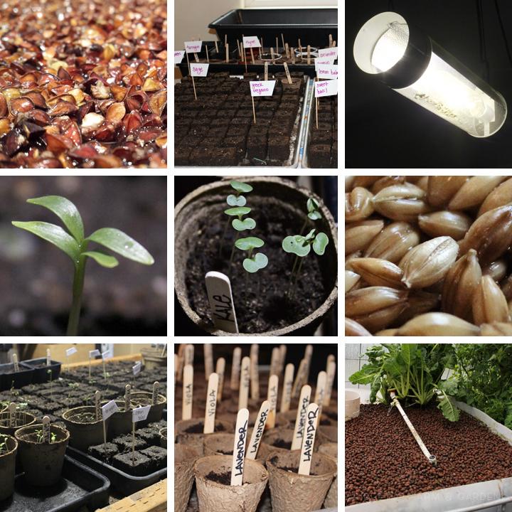 Ridgetop Farm and Garden | 2016 Update | Week 9| Seeds and Fodder