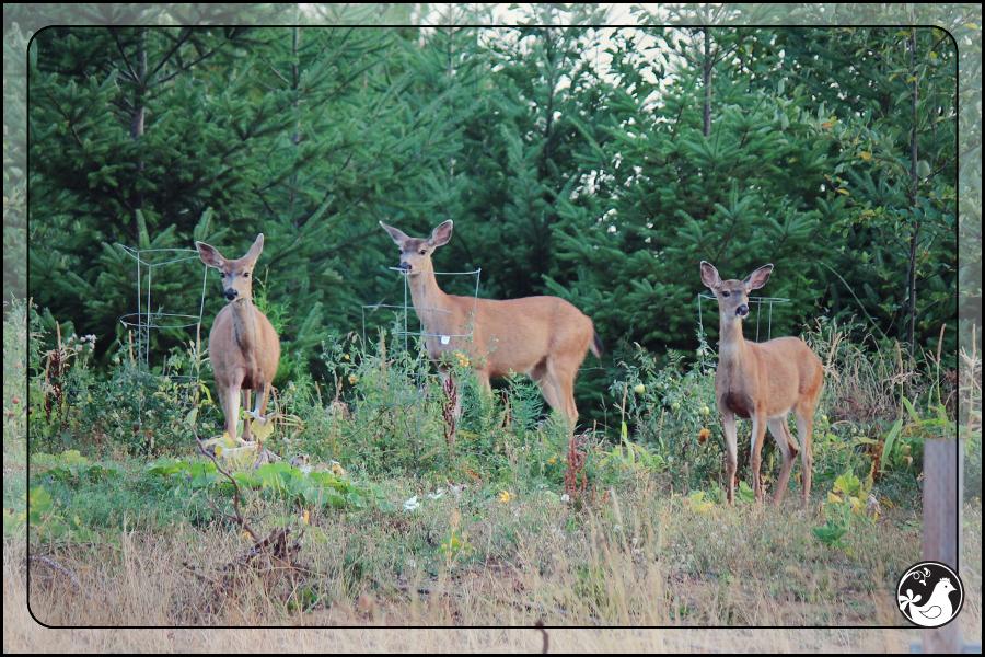 Ridgetop Farm and Garden | September 2014 Update