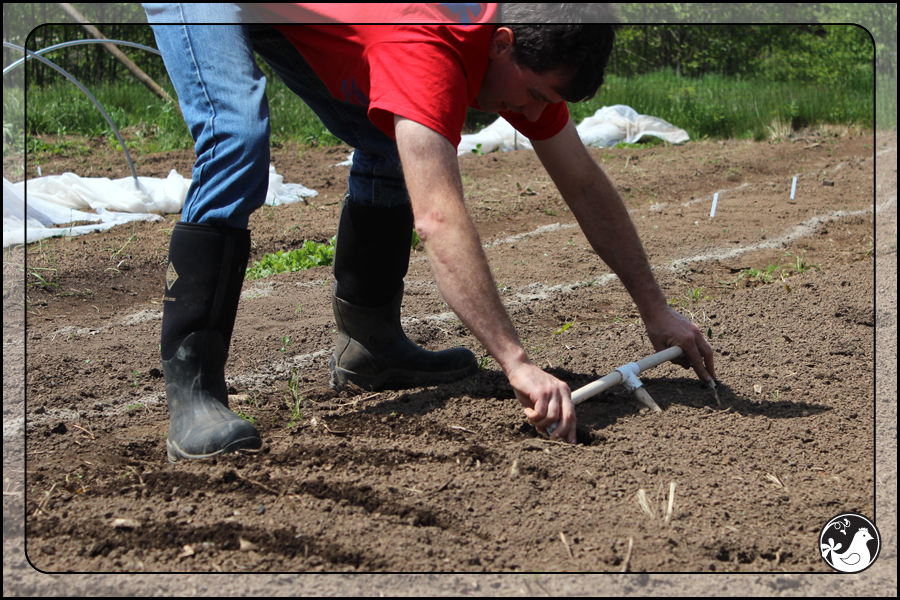 Ridgetop Farm and Garden | May 2014 Update