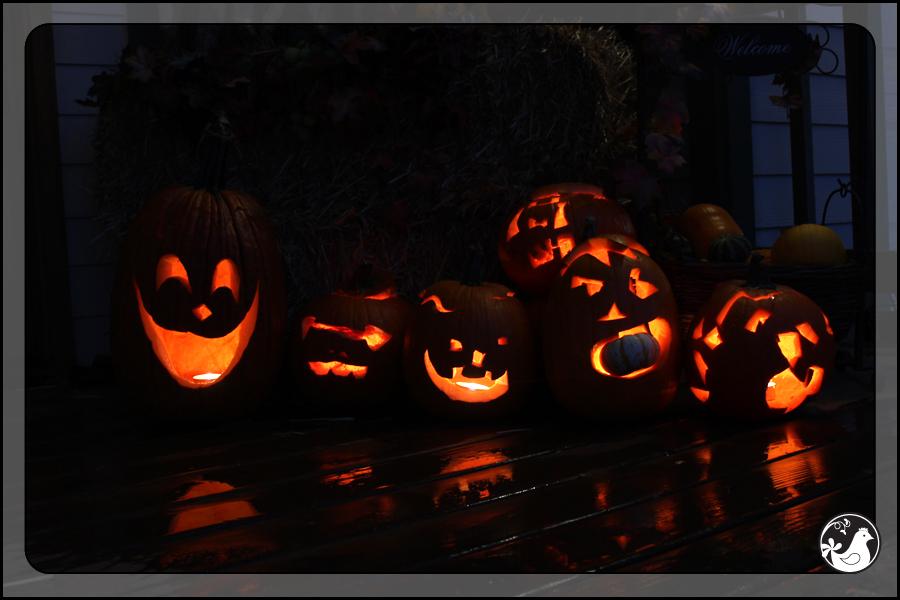 Ridgetop Farm and Garden | October 2014 Update