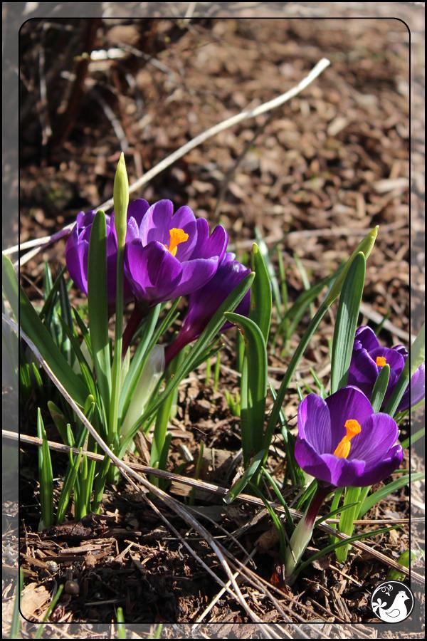 Ridgetop Farm and Garden | February 2014 Update