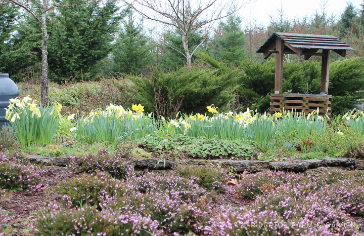 Ridgetop Farm and Garden | Bloom Day | March 2016