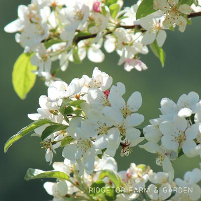Bloom Day – April 2016