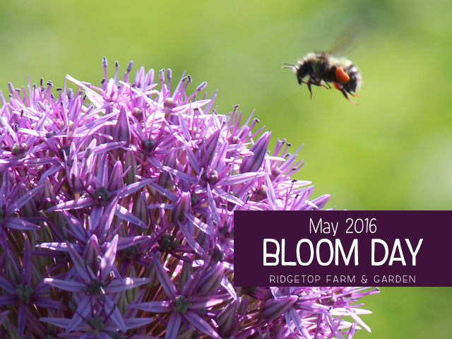 Ridgetop Farm and Garden | May 2016 Bloom Day