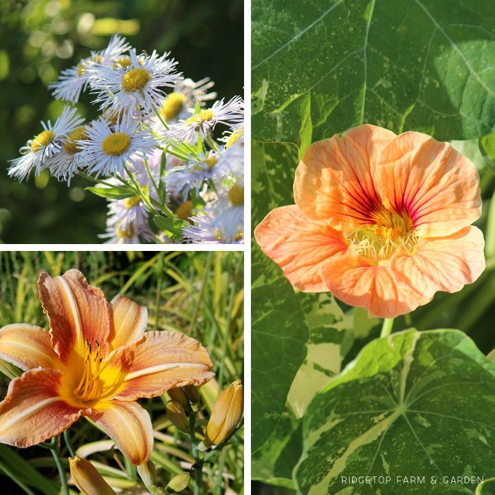 Ridgetop Farm and Garden | Bloom Day | June 2016