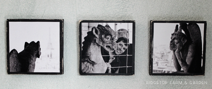 Ridgetop Farm and Garden | Notre Dame Chimera Trio | Photo Craft