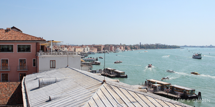 Ridgetop Farm and Garden | Travel | St. Mark's Square | Venice | Italy | Europe