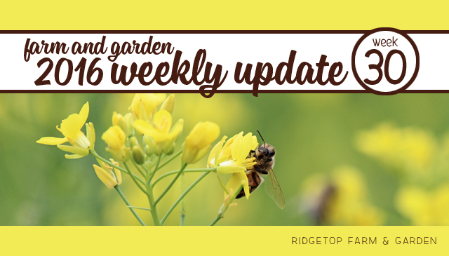 2016 update - week 30 - title