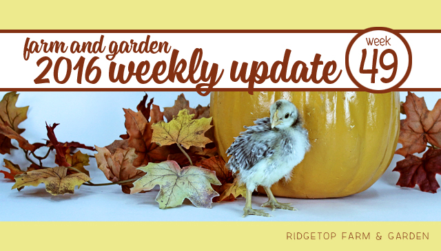 Ridgetop Farm and Garden | 2016 Update | Week 49