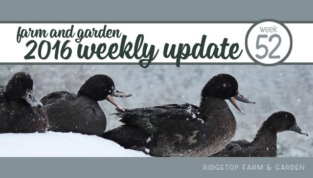 Ridgetop Farm and Garden | 2016 Update | Week 52