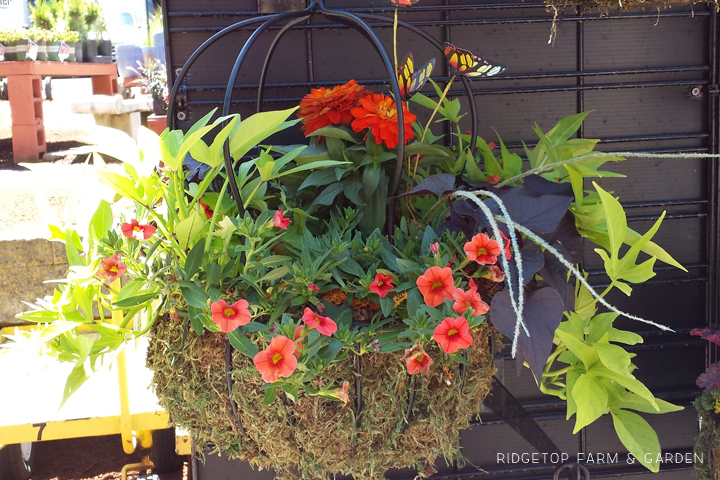 Ridgetop Farm and Garden | Nursery | The Garden Corner