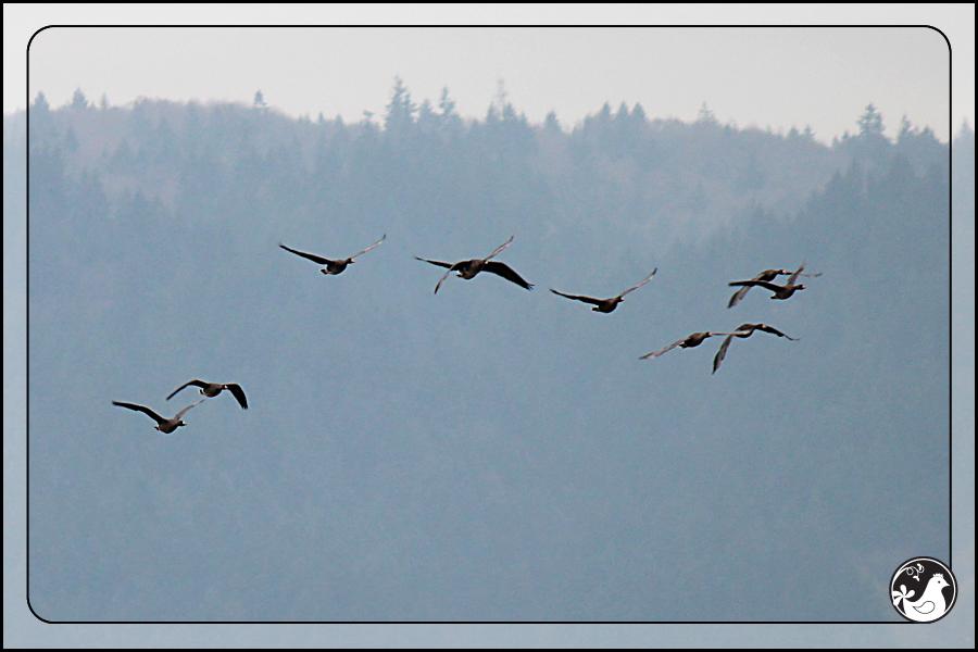 Ridgetop Farm and Garden | Birds of 2013 | Week 52 |