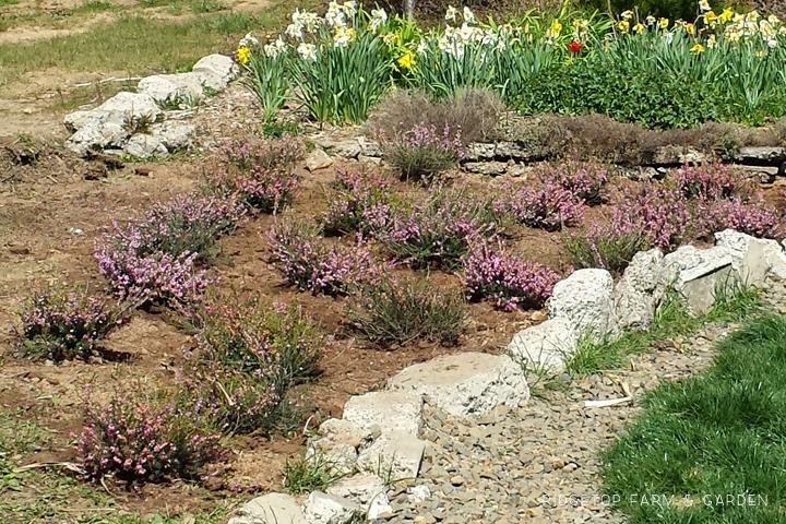 Ridgetop Farm and Garden   Heather