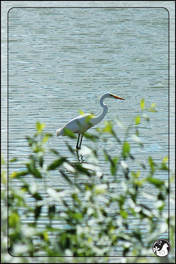 Ridgetop Farm and Garden | Birds of 2013 | Week 36