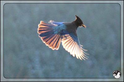 Birds of 2013: Week 1