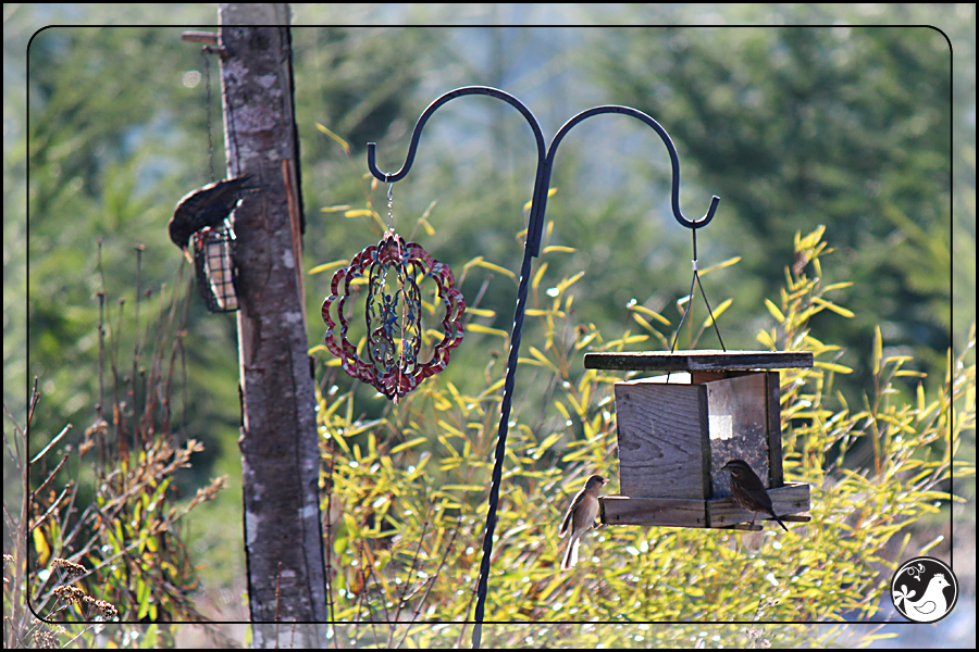 Ridgetop Farm and Garden | Birds of 2013 | Week 15 |