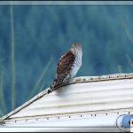 Birds of 2013: Week 40