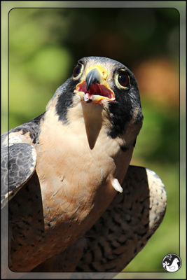 Birds of 2013: Weeks 38 and 39