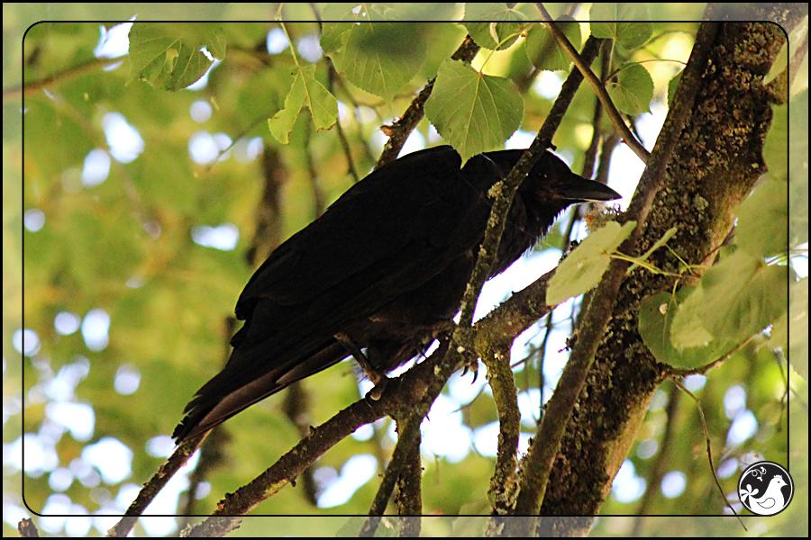 Ridgetop Farm and Garden | Birds of 2013 | Week 29 | Laurelhurst Park