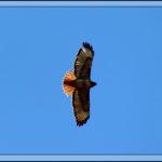 Birds of 2013: Week 14
