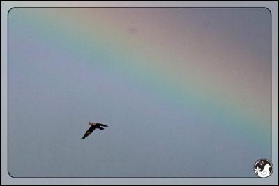 Birds of 2013: Week 41