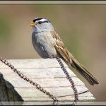 Birds of 2013: Week 13
