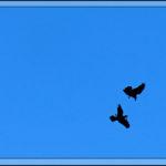 Birds of 2013: Week 12