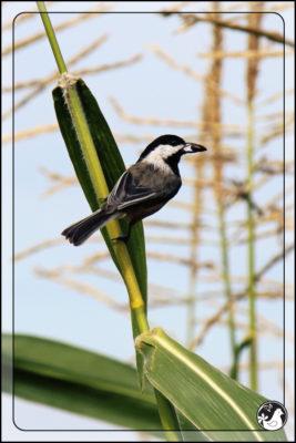 Birds of 2013: Week 42