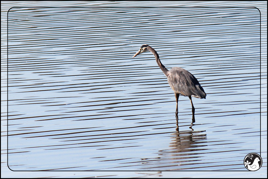 Ridgetop Farm and Garden | Birds of 2013 | Week 43