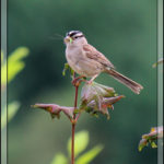 Birds of 2013: Week 34