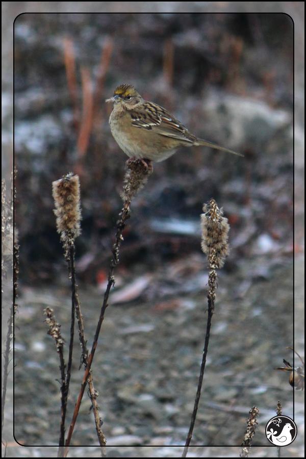 Ridgetop Farm and Garden   Birds of 2013   Week 51