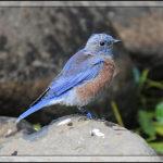 Birds of 2013: Week 26
