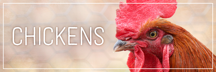 Ridgetop Farm and Garden | Farm Animals | Chickens